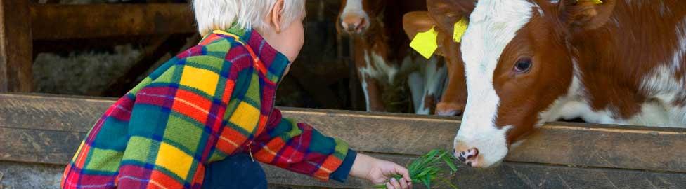 Animal Health International - Home